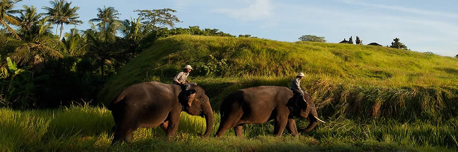 BALI ELEPHANT RIDE TOUR | TOURS TO RIDING AN ELEPHANT IN BALI ISLANDS | BALI GOLDEN TOUR