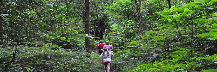 Bali Jungle Trekking Tour Bali Forest Trekking Tours