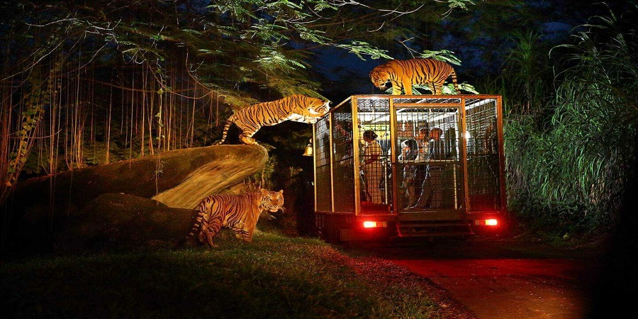 Bali Safari Marine Park | Night Safari Packages | Bali Golden Tour