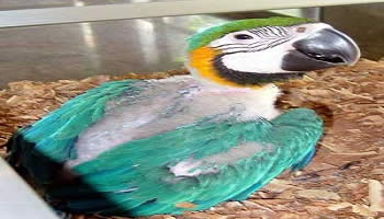 Bali Bird Park | Bali Activities Tour | Bali Golden Tour