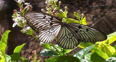 Bali Butterfly Park | Bali Activities Tour | Bali Golden Tour