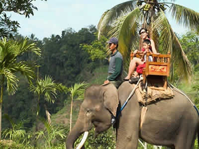 The Adventure Short Treck ( 30 Minutes) | Bali Elephant Camp | Bali Golden Tour