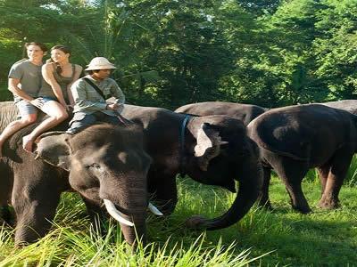Bali Elephant Back Safari | Bali Zoo Elephant Ride Tour