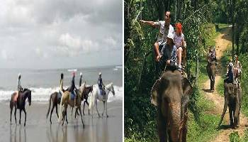 Bali Horse Riding and Elephant Ride Tour | Bali Double Activities Tour Packages | Bali Golden Tour