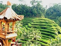 VIEW TEGALLALANG RICE TERRACE | UBUD RICE TERRACE | BALI INTEREST PLACE | BALI GOLDEN TOUR
