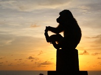ULUWATU TEMPLE MONKEY | ROCK CLIFF TEMPLE | Bali Golden Tour